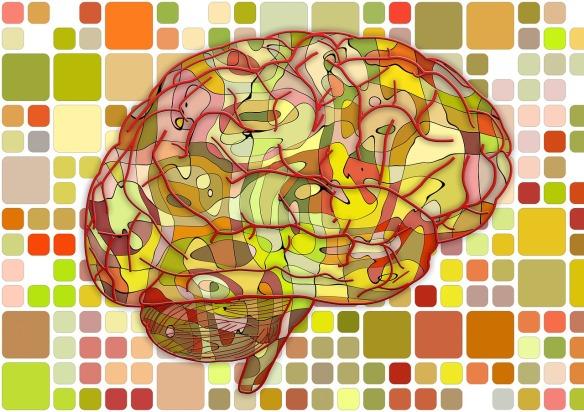 Brain circuits.