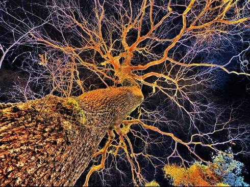 A Tree Neuron