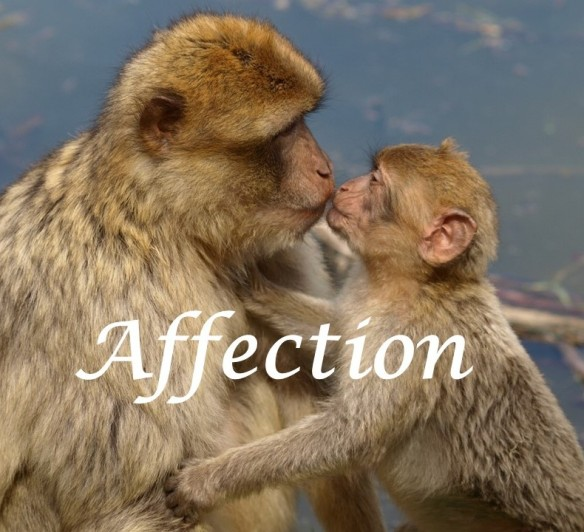 Affectionate