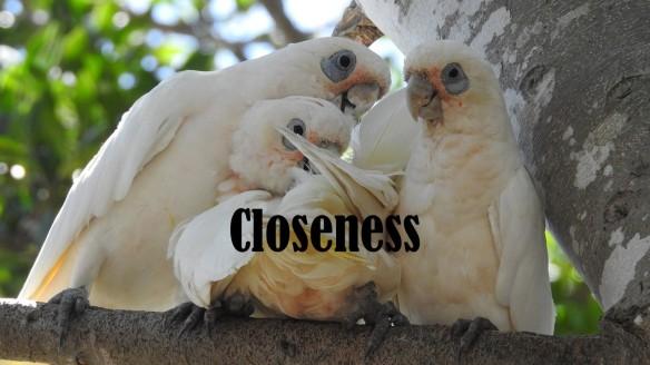 Family Closeness.