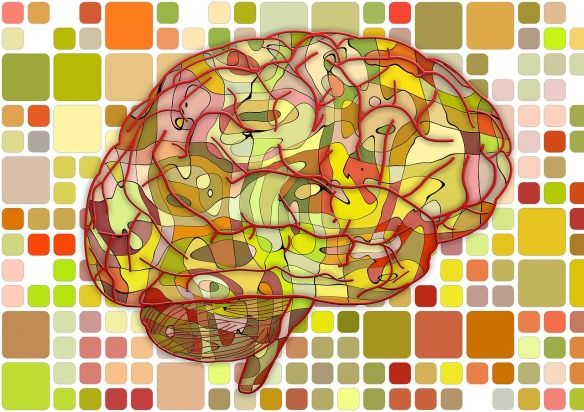PNG of brain.