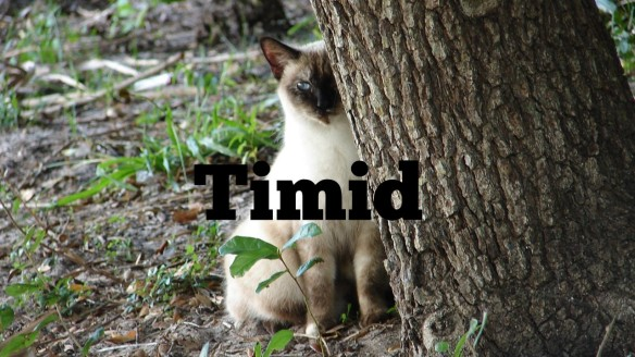 Timid